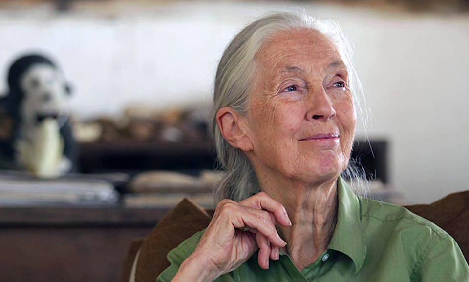 <p>Dr Jane Goodall calls for an end to the illegal trade of wildlife</p> ((The Jane Goodall Institute/JGI USA Comms))