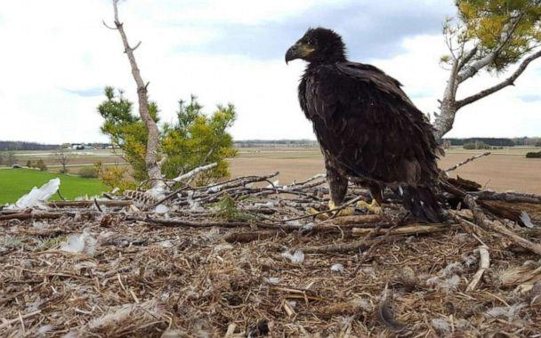 PHOTO: A field nest from the Wisconsin Department of Natural Resources 2019 survey of bald eagle nests. (Wisconsin Department of Natural Resources)