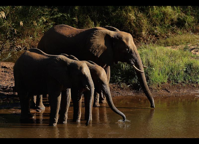 Elephants drink from the Luvuvhu river in Pafuri game reserve. Photo by Cameron Spencer/Getty Images