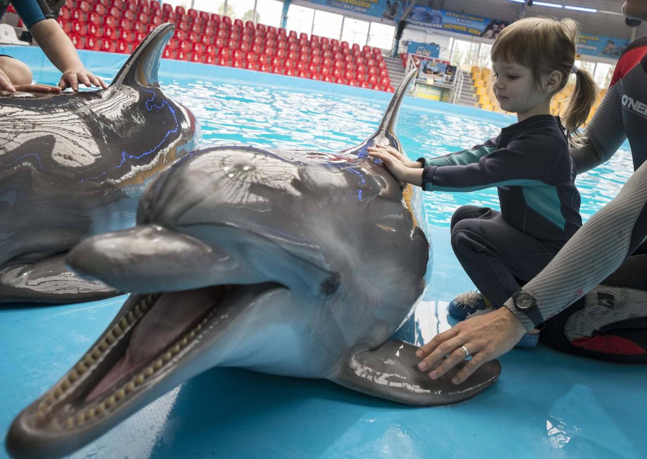 A girl touches a dolphin during a dolphin therapy session at the Nemo Dolphinarium in Kiev September 28, 2013. The aquarium provides a programme for pregnant women, children and people with disabilities to receive therapy by swimming, touching and playing with the dolphins. REUTERS/Gleb Garanich (UKRAINE - Tags: SOCIETY ANIMALS HEALTH TPX IMAGES OF THE DAY)