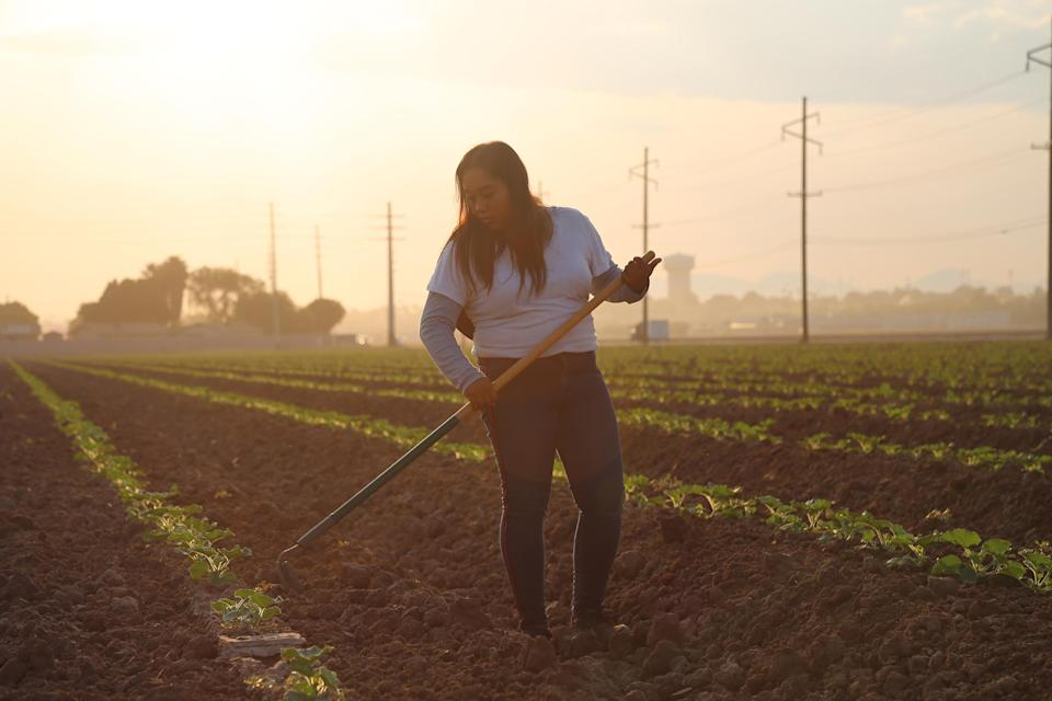 On a mid-September morning, Jimena Aguilar, 17,  weeds a field to prepare for incoming crops on an Arizona farm. (Christine Romo / NBC News)
