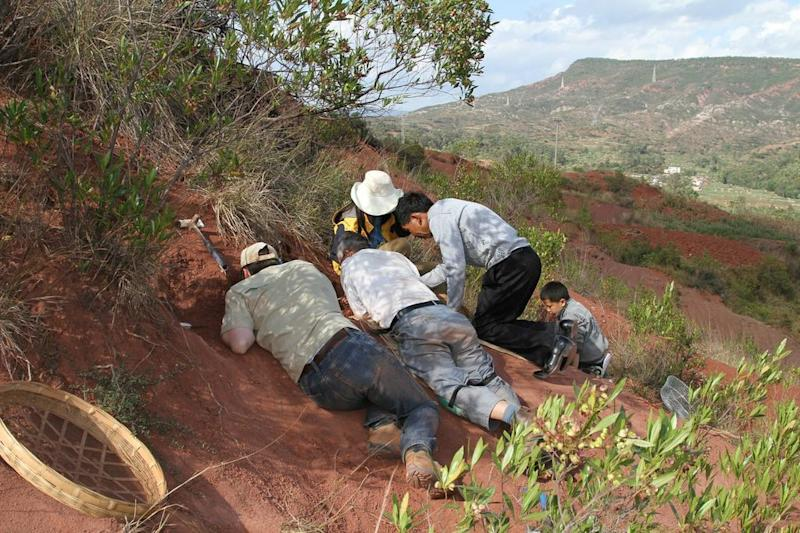 This image released by the University of Toronto shows field crew and volunteers working at the Dawa embryonic bonebed site near the city of Lufeng, in Yunnan, China. An international team of scientists discovered a cache of dinosaur embryos estimated to be 190 million years old, the fossilized bones are among the oldest dinosaur embryos in the world. (AP Photo/University of Toronto, R. Reisz)