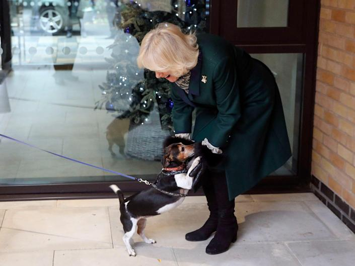 Camilla Duchess of Cornwall with her dog Beth