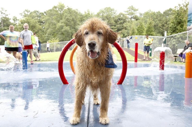 This July 12, 2012 photo released by Beneful shows a dog in the custom-designed splash pads in a $500,000 Beneful Dream Dog Park renovation that was unveiled last summer in Alabaster, Ala. The dog park, with a fetch football field, an exercise path and tunnels, is part the city's flagship Veteran's Park, with a ball field complex, 2.5-mile walking trail, eight pavilions with picnic tables, two playgrounds, a skateboard park and veteran's memorial. (AP Photo/Beneful)