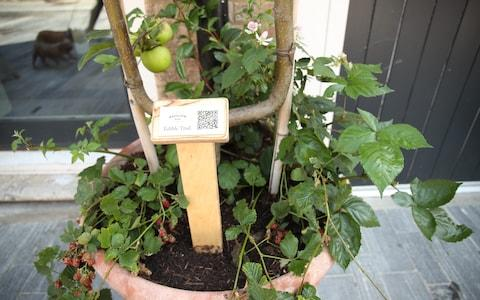 Blackberry and apple plants hang out with an instructional QR code
