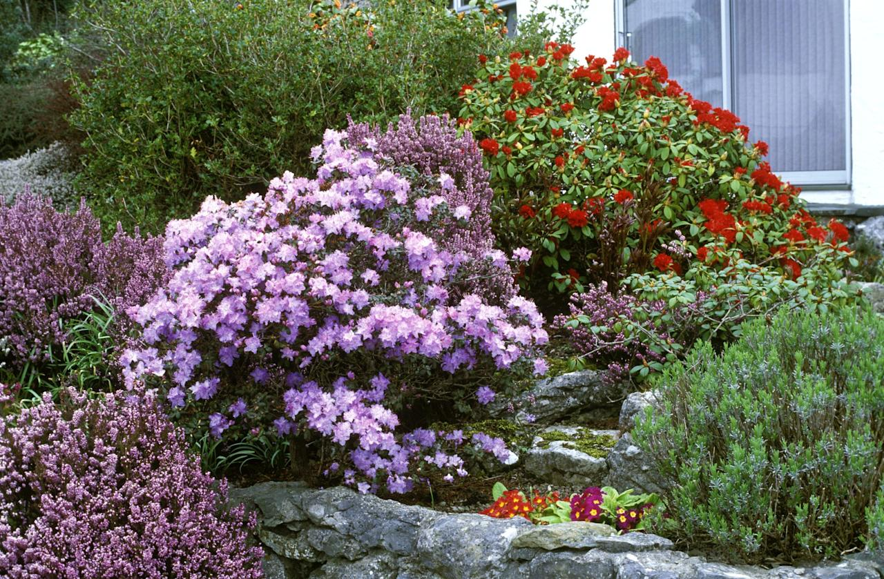 these 20 flowering shrubs will fill your garden with blooms. Black Bedroom Furniture Sets. Home Design Ideas