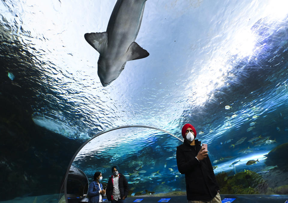 People wear face masks while watching the marine life at Ripley's Aquarium of Canada during the COVID-19 pandemic in Toronto, on Wednesday, Oct. 28, 2020. (Nathan Denette/The Canadian Press via AP)