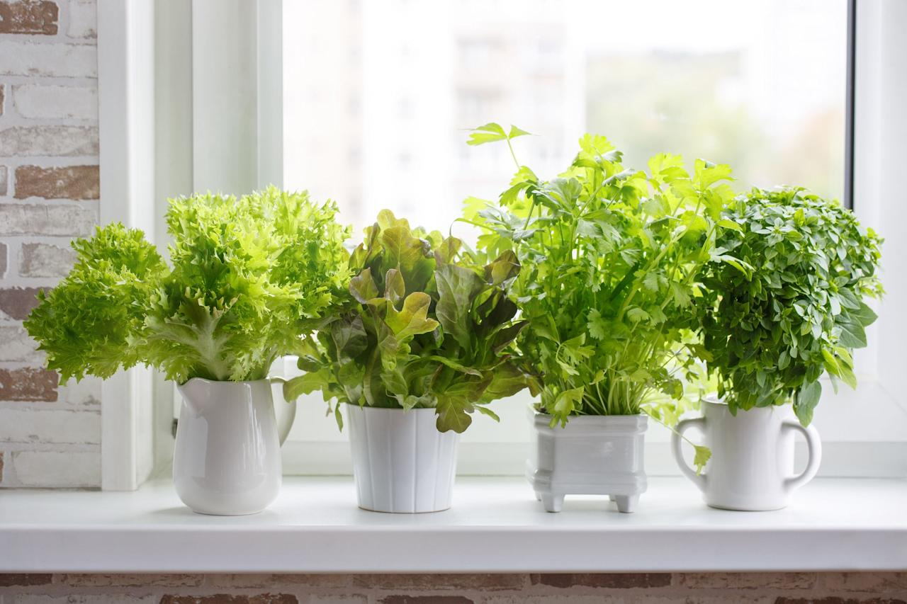 "<p>Nothing livens up a dish like fresh herbs, which is why you should always have some on hand. And the best way to do that? Grow them right inside your own home. Whether you just want some fresh basil or you're looking to grow a whole host of herbs—and whether or not you're known for your green thumb—there are plenty of gorgeous indoor planters and gardens that can make your dream a reality. </p><p>These <span class=""redactor-unlink"">herb garden planters</span> will <a href=""https://www.housebeautiful.com/room-decorating/kitchens/g623/beautiful-designer-kitchens/"" target=""_blank"">look killer in your kitchen</a> (or wherever you choose to display them) <em>and</em> keep your meals tasting fresh to death all year long. And if you're more of a gardening beginner, look out for self-watering options and easy-to-use kits. </p>"