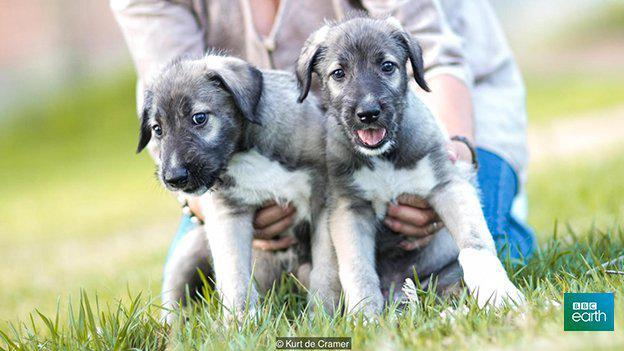 Adorable Identical Twin Puppies Are the First Ever Recorded