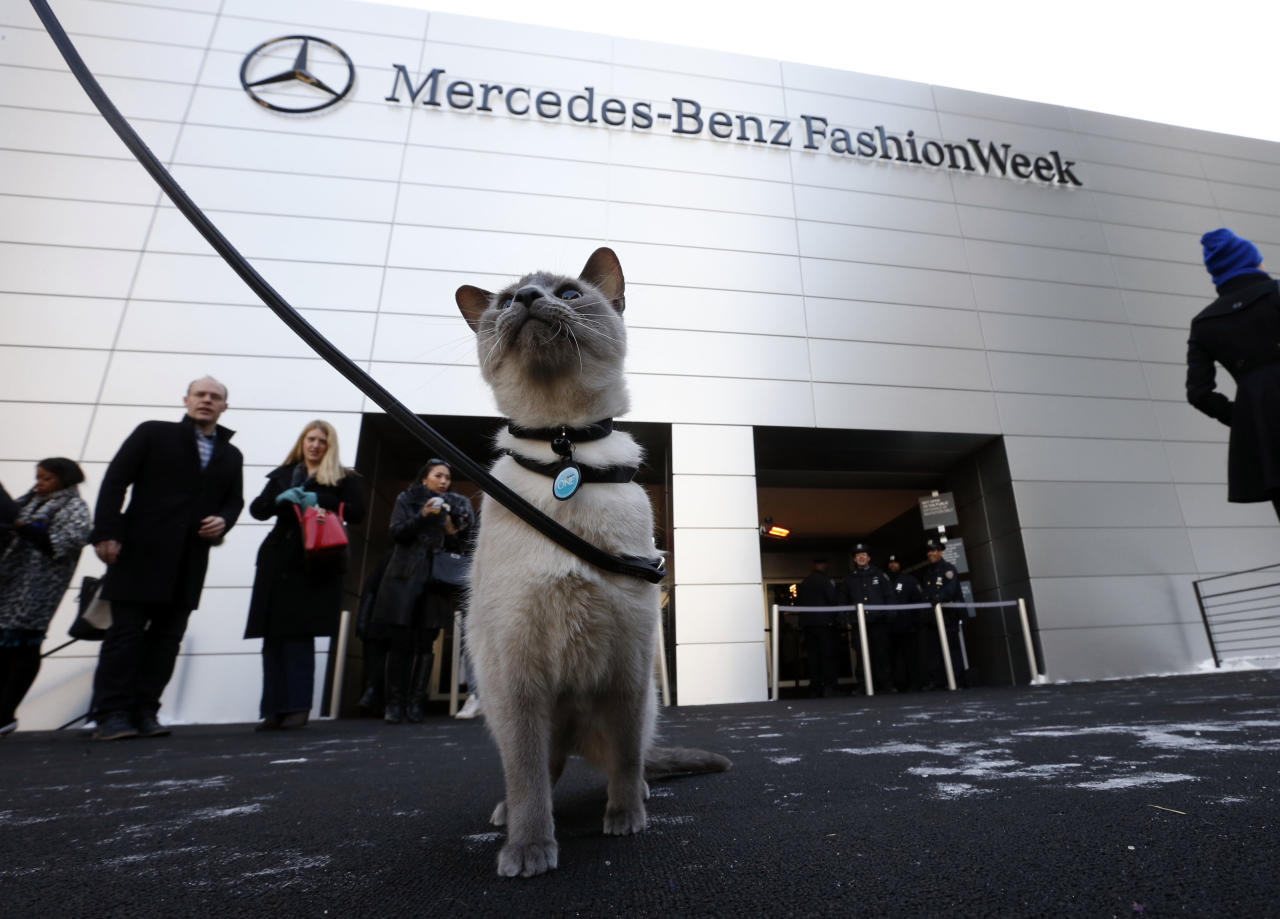 "<div class=""caption-credit""> Photo by: Jason DeCrow/Invision for Purina ONE/AP Images</div><div class=""caption-title""></div><p>   Lily, a 4-year-old Siamese Blue Point rescue cat, made history on Sunday on designer Tracy Reese's runway show. For the first time at New York Fashion Week, a catwalk actually featured a real live cat. Can you believe it took this long? </p>"