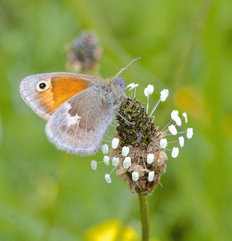 The number of butterflies in towns and cities are declining more dramatically than their countryside counterparts, a study has revealed.