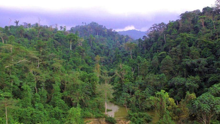 The Atewa Forest is at the heart of a conservation battle in Ghana. Arocha Ghana photo