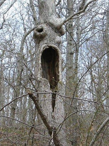 This terrifying screaming tree was captured in Hither Hills State Park, Montauk, New York. (Photo: brothergrimm/environmentalgraffiti.com)