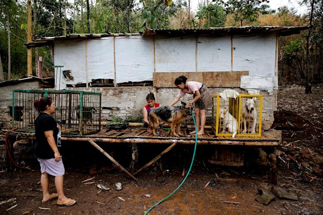 <p>Dog breeder Agus Badud's wife and daughter wash dogs at their house at Cibiuk village of Majalaya, West Java province, Indonesia, Sept. 27, 2017. (Photo: Beawiharta/Reuters) </p>