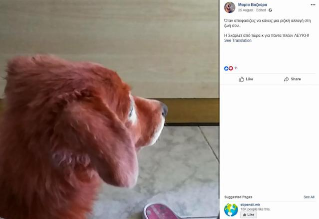 The dog, which was found painted red by activists, is recovering at his adoptive home. (CEN)