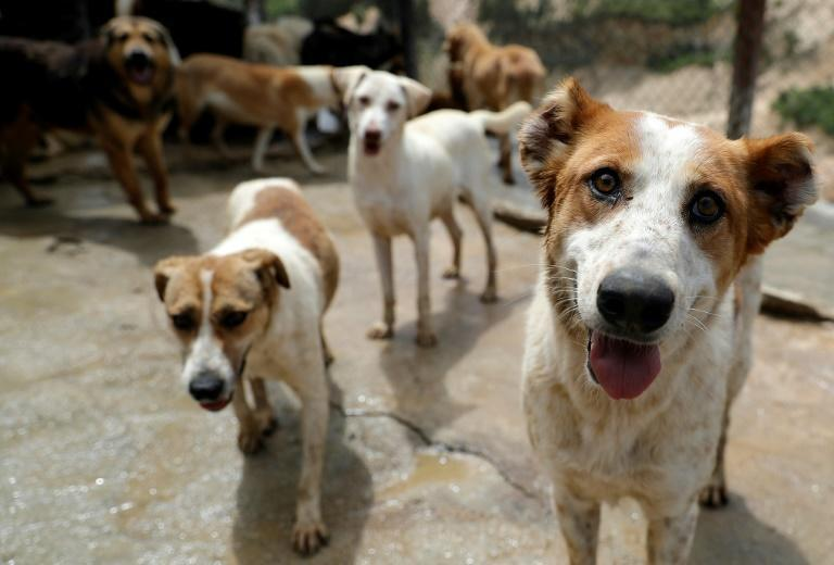 Rescued dogs are pictured at the Woof N' Wags shelter