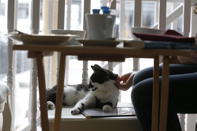 """A visitor strokes a cat in the newly opened Lady Dinah's Cat Emporium in London, Friday, April 4, 2014. Feline company is exactly what one of London's newest cafes is offering _ and stressed-out city-dwellers are lapping it up. """"People do want to have pets and in tiny flats, you can't,"""" said cafe owner Lauren Pears, who opened Lady Dinah's Cat Emporium last month in an area east of the city's financial district. (AP Photo/Sang Tan)"""