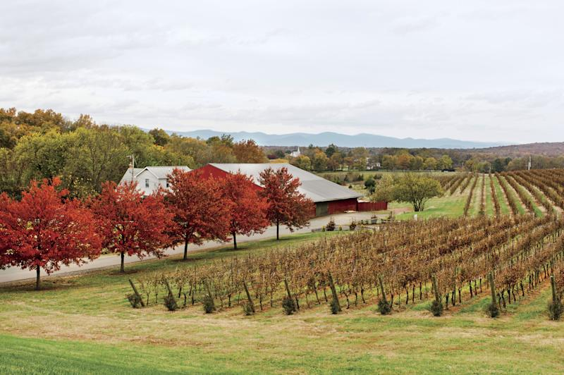 Visit Barboursville Vineyards on the Monticello Wine Trail. | Patricia Lyons