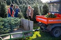 Families make a tradition of traveling to the N.C. mountains for choose-and-cut Christmas trees.