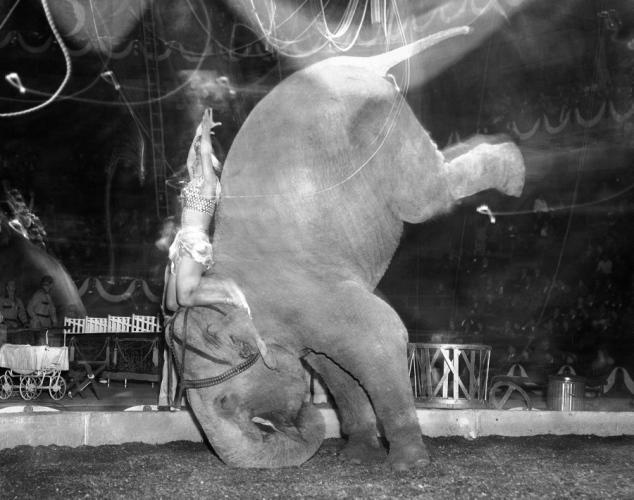 Look, no hands! Skee Otaris and her elephant perform for the circus crowds at Madison Square Garden on April 9, 1949.