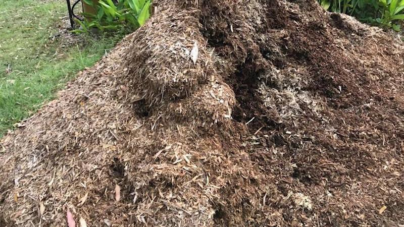 can you spot the snake hidden in this pile of compost. Black Bedroom Furniture Sets. Home Design Ideas
