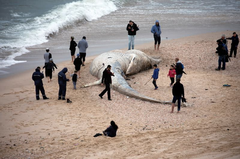 People stand near the body of a dead whale after it washed ashore from the Mediterranean near Nitzanim, Israel