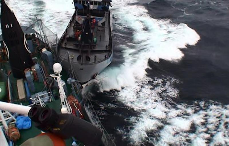 Japanese whalers, protesters clash off Antarctica