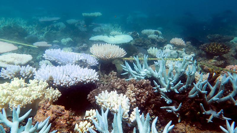 Half of Australia's Great Barrier Reef corals are dead, killed by climate change