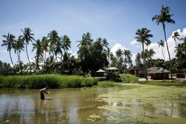 Militants began attacking Palma, a gas hub in the province of Cabo Delgado, on Wednesday, forcing nearly 200 workers, including foreign employees, to flee