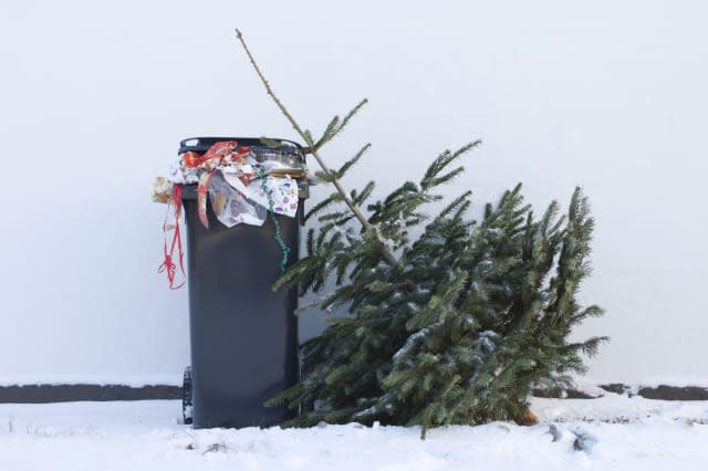 Discarded Christmas tree waiting to be collected