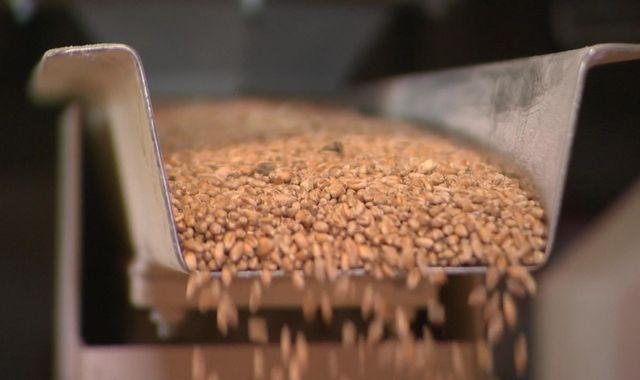 Worst UK wheat harvest in 40 years prompts flour price hike fears