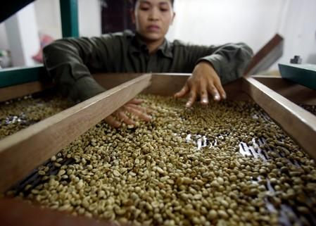 Asia Coffee: Vietnam domestic prices fall; Indonesia muted on holiday