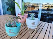 <p>The ceramic <span>Disney Princess X POPSUGAR Moana Planters</span> ($25 for three) are perfect for displaying small plants and succulents. Since they don't have drainage holes, I just put the plants into them in their grower pots. It's easier to swap out the plants or switch up how you use them this way! One reviewer also noted that you can drill holes in the bottom of them using a glass drill bit if you want to put the soil directly in the pot.</p>