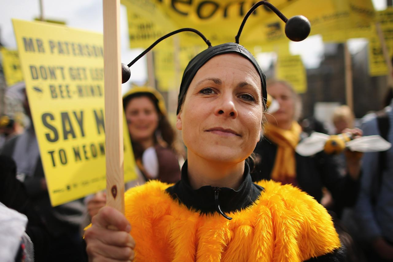 LONDON, ENGLAND - APRIL 26:  A campaigner dressed as a bee demonstrates on Parliament Square on April 26, 2013 in London, England. Over a hundred campaigners including British fashion designers Dame Vivienne Westwood and Katharine Hamnett gathered on Parliament Square, some dressed as beekeepers, to urge British Secretary of State for the Environment Food and Rural Affairs, Owen Paterson, to not block EU proposals to suspend the use of bee killing pesticides.  (Photo by Dan Kitwood/Getty Images)
