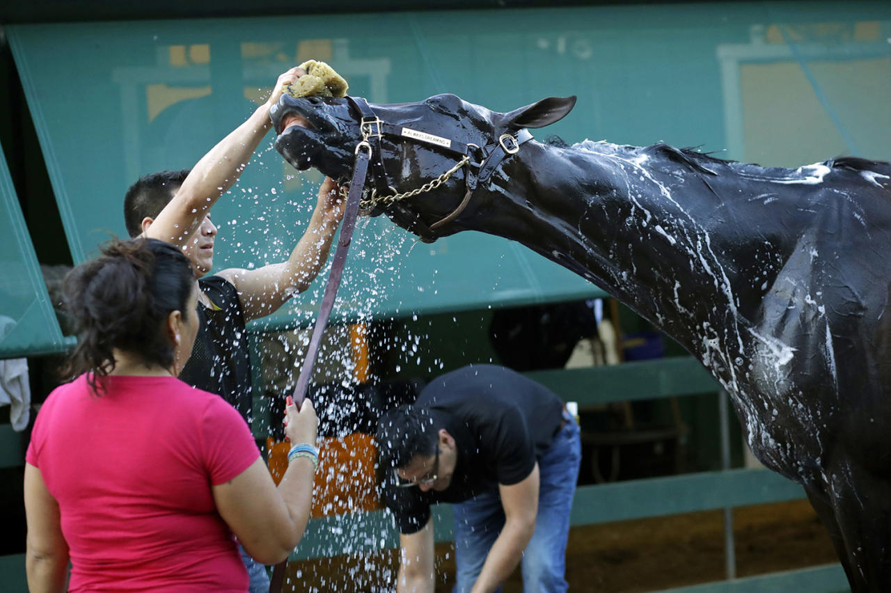 <p>Kentucky Derby winner Always Dreaming is washed after a workout at Pimlico Race Course in Baltimore, May 18, 2017. The Preakness Stakes horse race is scheduled to take place May 20. (Photo: Patrick Semansky/AP) </p>