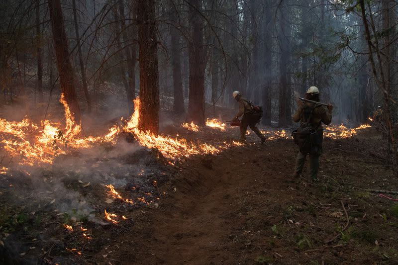 Firefighters from Las Vegas set ablaze brush and trees during a firing operation near the Obenchain Fire in Butte Falls, Oregon