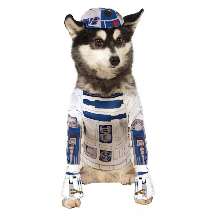 Dog wearing a Star Wars R2-D2 Dog Costume on a white background