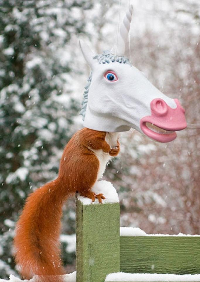"""<p>This <a href=""""https://www.popsugar.com/buy/Unicorn-Head-Squirrel-Feeder-Archie-McPhee-105660?p_name=Unicorn%20Head%20Squirrel%20Feeder%20by%20Archie%20McPhee&retailer=amazon.com&pid=105660&price=17&evar1=savvy%3Auk&evar9=45317349&evar98=https%3A%2F%2Fwww.popsugar.com%2Fsmart-living%2Fphoto-gallery%2F45317349%2Fimage%2F45317532%2FUnicorn-Head-Squirrel-Feeder-Archie-McPhee&list1=shopping%2Cgifts%2Choliday%2Chumor%2Cgift%20guide%2Crelationships%2Cfriendship%2Cwhite%20elephant%20gifts%2Cunder%20%24100%2Cgifts%20for%20women%2Cgifts%20for%20men%2Cgifts%20under%20%24100%2Cgifts%20under%20%2475&prop13=api&pdata=1"""" rel=""""nofollow"""" data-shoppable-link=""""1"""" target=""""_blank"""" class=""""ga-track"""" data-ga-category=""""Related"""" data-ga-label=""""https://www.amazon.com/Unicorn-Squirrel-Feeder-Archie-McPhee/dp/B014LIOC64/ref=sr_1_17?s=home-garden&amp;ie=UTF8&amp;qid=1510092590&amp;sr=1-17&amp;keywords=squirrel+feeder"""" data-ga-action=""""In-Line Links"""">Unicorn Head Squirrel Feeder by Archie McPhee</a> ($17) also comes as a cat or horse.</p>"""