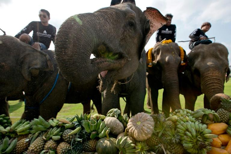 The tournament has faced criticism from animal rights activists, who say mahouts inflict pain on the elephants