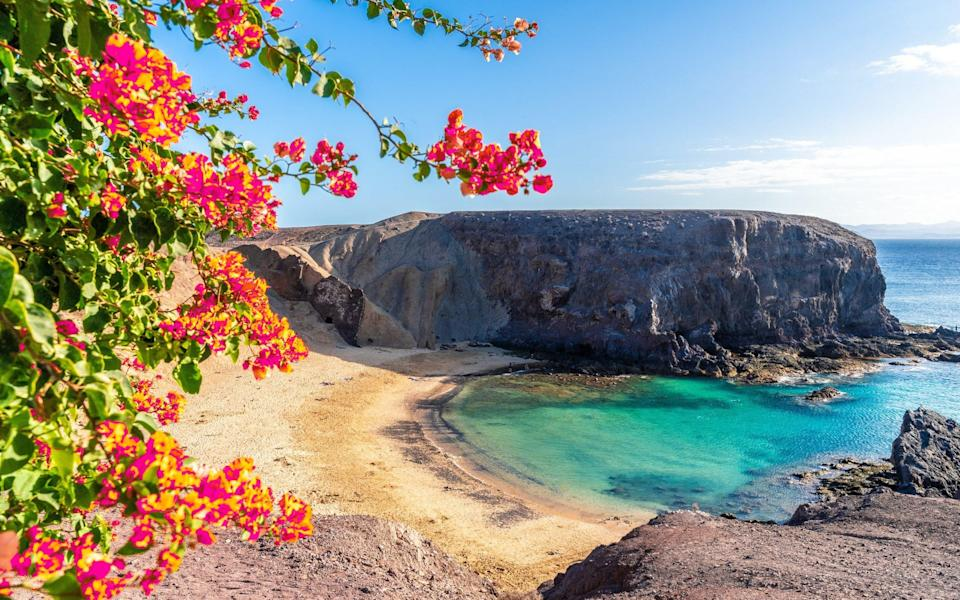 flowers on deserted beach with blue waters - Balate Dorin /iStockphoto