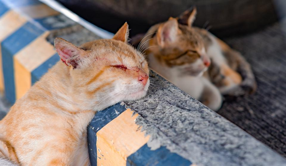 Stray cats in the Philippines. (Photo: Getty Images)