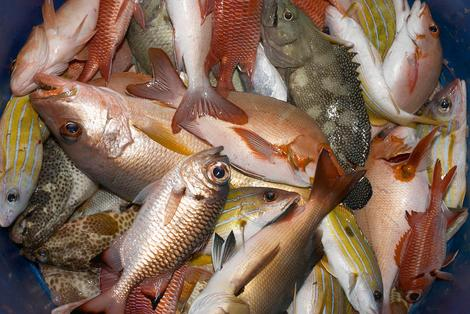 Steer clear of this seafood that's bad for you and the environment