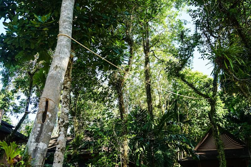Ropes are installed between trees in the resort to make a bright for slow lorises. Photo: Coconuts