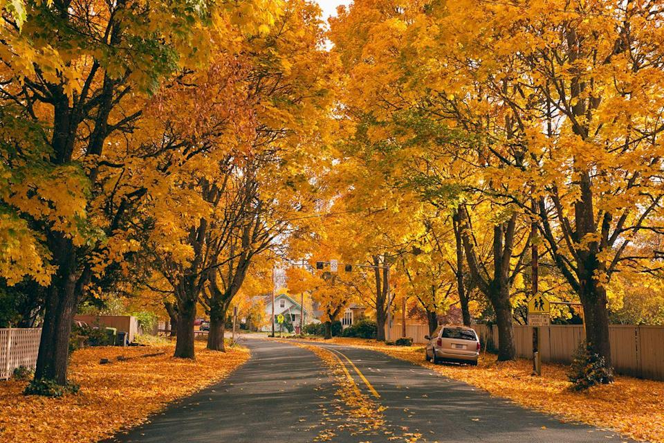 """<p>Walk down <a href=""""https://www.countryliving.com/life/travel/g2566/best-leaf-peeping-in-america/"""" rel=""""nofollow noopener"""" target=""""_blank"""" data-ylk=""""slk:a quiet suburban street"""" class=""""link rapid-noclick-resp"""">a quiet suburban street</a> lined with trees shedding their leaves. The beauty could inspire anyone to give up city living.</p>"""
