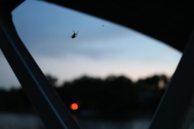 Low Angle View Of Spider On Glass