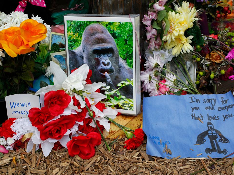 <p>Flowers lay around a bronze statue of a gorilla and her baby outside the Cincinnati Zoo's Gorilla World exhibit days after Harambe the gorilla was shot dead after a boy fell into his enclosure, on  2 June 2016 in Cincinnati, Ohio</p> (John Sommers II/Getty Images)