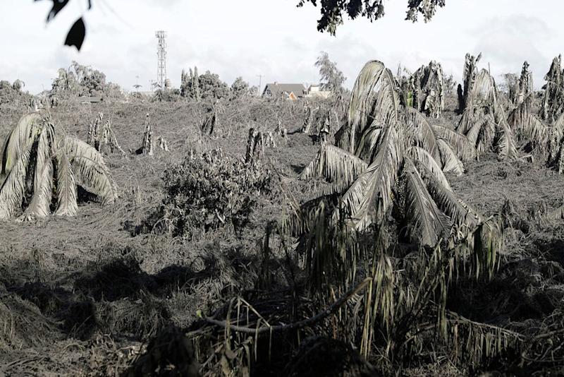 Trees covered with falling ash from the volcano | Aaron Favila/AP/Shutterstock