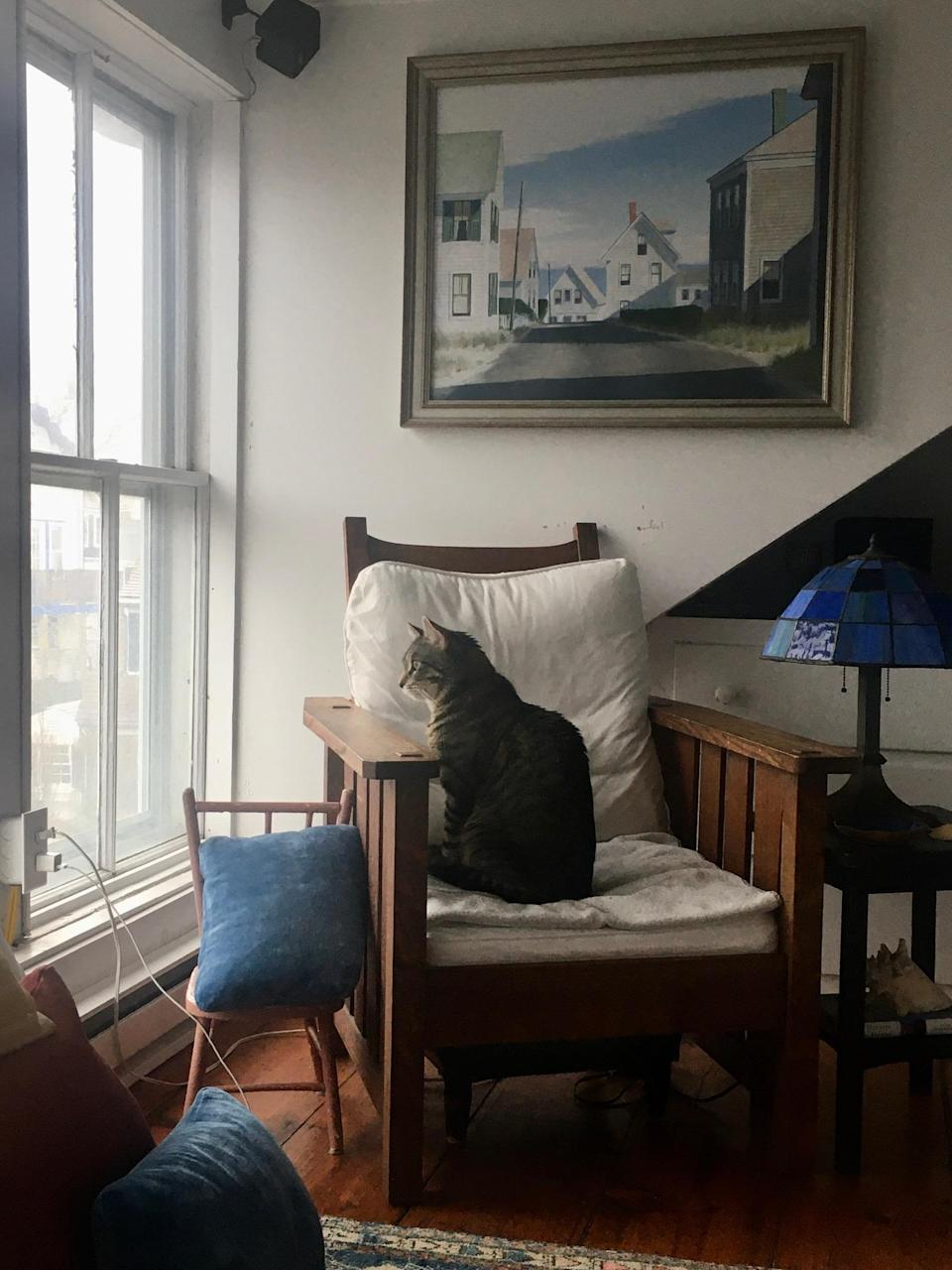 Beth Greenfield and her family have a newly adopted cat to keep them company. (Photo: Beth Greenfield)