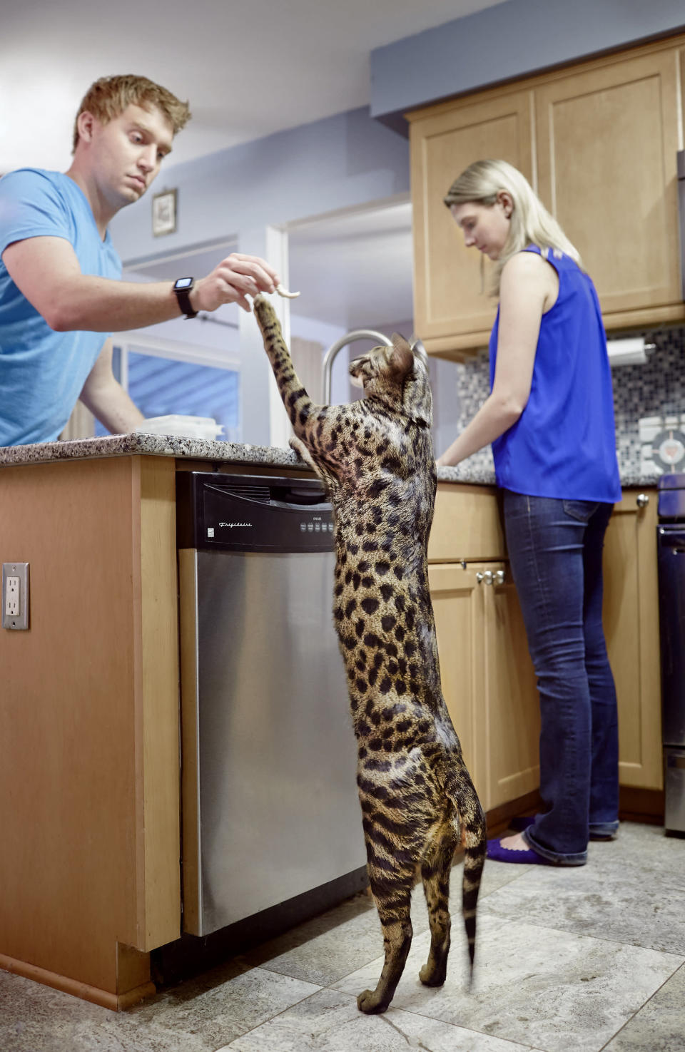 <p>Arcturus the Tallest Cat with its owner William and Lauren Powers. He lives in Ann Arbor, Michigan, and stands at 48.4cm. (PA) </p>