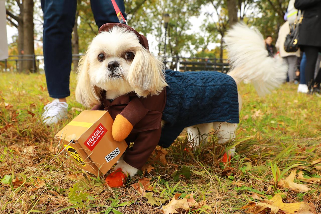 <p>A dog dressed as UPS worker is seen during the 28th Annual Tompkins Square Halloween Dog Parade at East River Park Amphitheater in New York on Oct. 28, 2018. (Photo: Gordon Donovan/Yahoo News) </p>